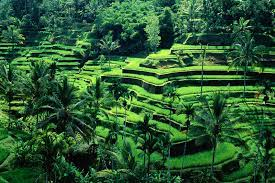 Bali ubud tour